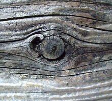 wooden eye by Fran E.