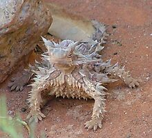 Thorny devil by Liz Worth