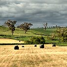 Making Hay by GailD