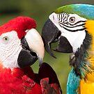 Macaws by Carlos Restrepo