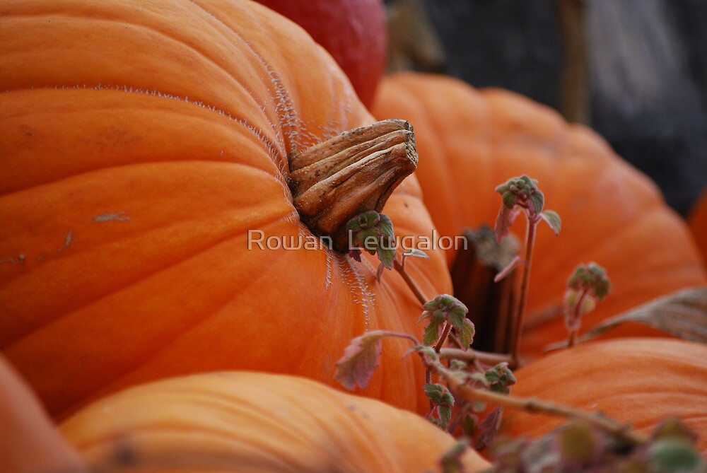 Pumpkin Time by Rowan  Lewgalon