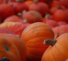 Flood of Pumpkins by Rowan  Lewgalon