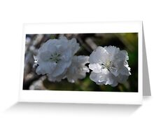 Flowering Peach Blossom Greeting Card