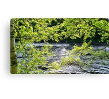 fast river with leaves and trees Canvas Print