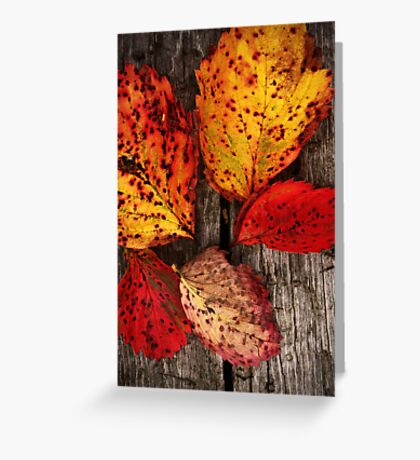 A Touch of The Autumnal Greeting Card