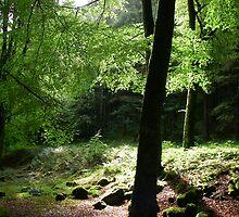 Scottish Woodlands by Rick Arnautovic
