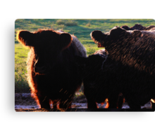 Mom Dad Jr. Cow  Canvas Print
