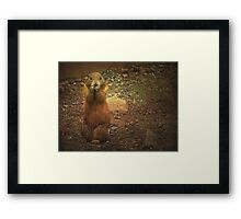 Prairie Dog - Community Framed Print