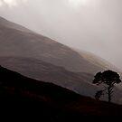 Glen Strathfarrar - In Awe by Kevin Skinner
