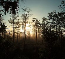 foggy swamp by kathy s gillentine