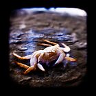 Crab by ADMarshall