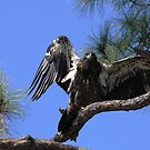 I am eagle bird by kathy s gillentine