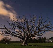 The Old Tree by BiffiB