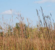 Tall Grass by Vonnie Murfin