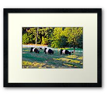 Grazing In The Grass Cows Framed Print