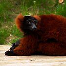Lemur by evilcat