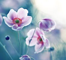 I ♥ my anemones by SylviaCook