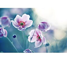 I ♥ my anemones Photographic Print