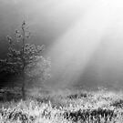 26.5.2015: Pine Tree in Sunlight by Petri Volanen