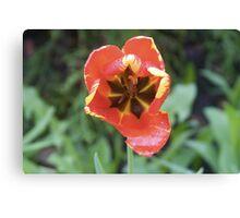 Sad Tulip Canvas Print