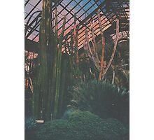 Cactus Life Photographic Print