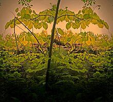 Pseudo mirror tree by kevinlucas