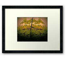 Pseudo mirror tree Framed Print
