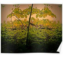 Pseudo mirror tree Poster