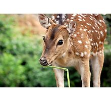 Dear Deer Photographic Print