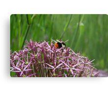 English Bumble Bee 1 Metal Print