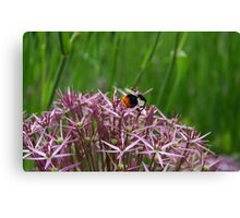 English Bumble Bee 1 Canvas Print