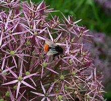 English Bumble Bee 2 by Susan Gallus
