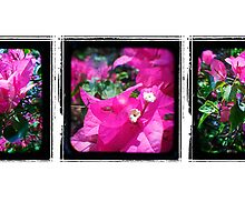 Through the Viewfinder Triptych by Jules Campbell