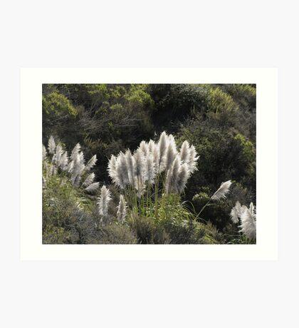 Sunlit Pampass Grass Art Print