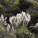 Sunlit Pampass Grass by Ellen Cotton
