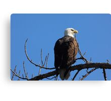our national bird Canvas Print