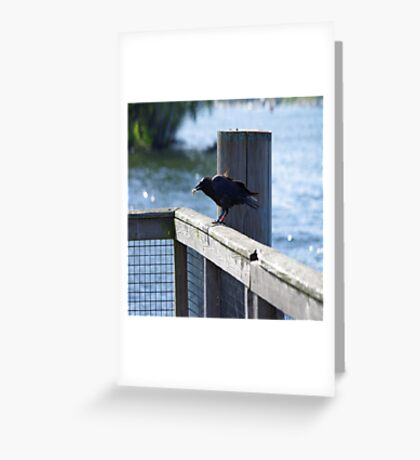 Crow Catches Salmon Greeting Card