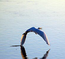 Wing Touches Water by KBSImages