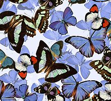 Composition With Echoed Butterflies #7  by Ivana Redwine