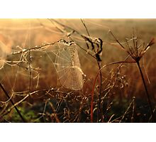 Morning Dew  Photographic Print