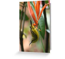 Honey-eater Greeting Card