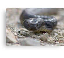 Reptile Rapture Canvas Print