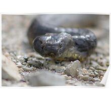Reptile Rapture Poster