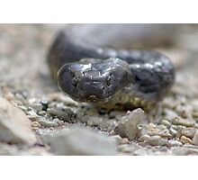 Reptile Rapture Photographic Print