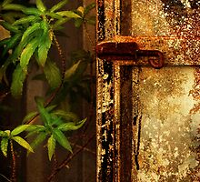 Rust, dust, decay by Louise Cooke