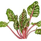 Swiss Chard by Maureen Sparling