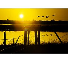 Sand Hill Cranes at Sunset Photographic Print
