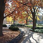 Autumn on Campus by Michele Markley