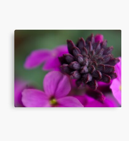 Wall Flower Seeds. Canvas Print