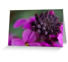 Wall Flower Seeds. Greeting Card
